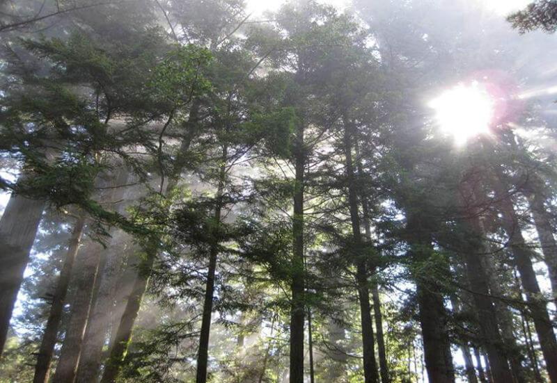 O efeito Tyndall pode ser explicado pela passagem da luz solar através da neblina.