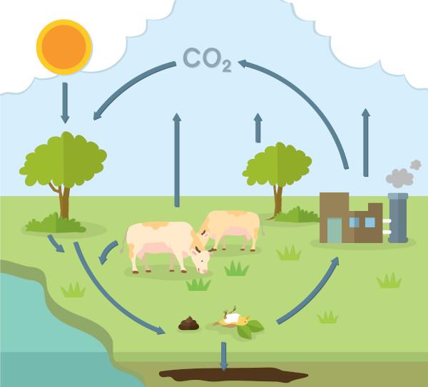 Imagem representativa do ciclo do carbono.