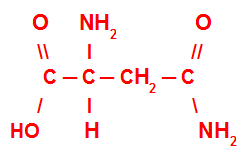 Fórmula estrutural da asparagina