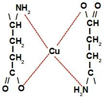 Representação da estrutura do complexo de cobre e glutamato