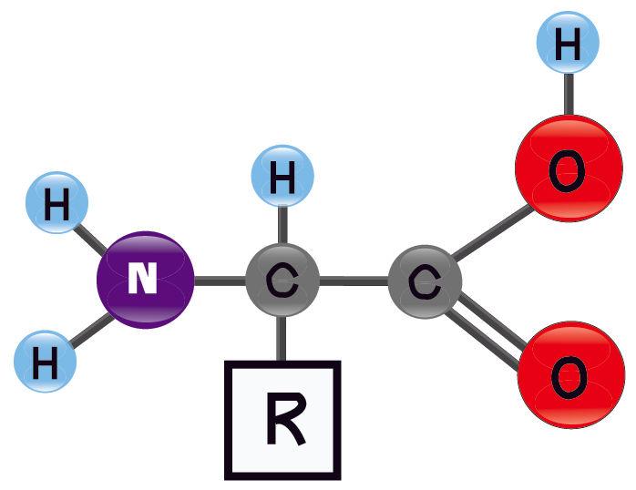 Representação geral de um aminoácido