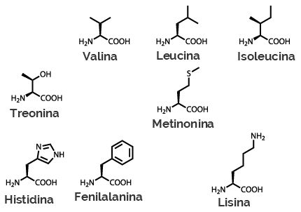 Fórmulas estruturais dos aminoácidos essenciais