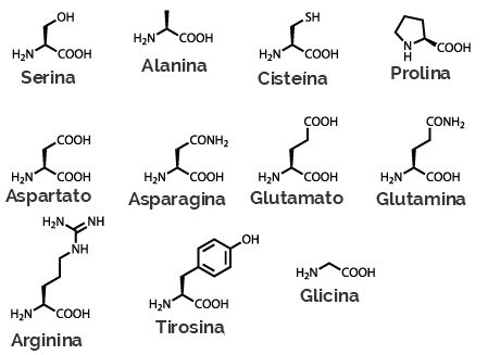 Fórmulas estruturais dos aminoácidos não essenciais