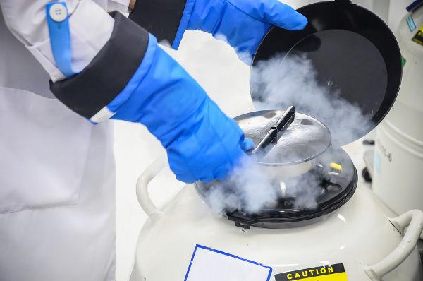 Espermatozoides armazenados em um tanque com nitrogênio líquido