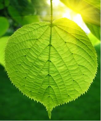 A fotossíntese é uma reação de oxidorredução que envolve transferência de elétrons e variação dos números de oxidação dos elementos envolvidos