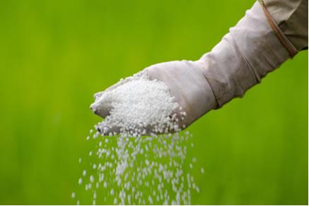 Fertilizantes agrícolas são produzidos a partir de uma amida, a ureia.