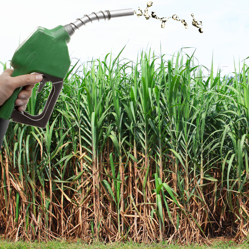 No Brasil, a matéria-prima para a produção do etanol é a cana-de-açúcar