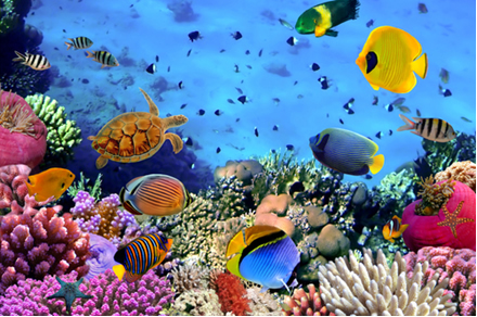 No mar existem vários sais dissolvidos, mas também há sais não dissolvidos, como o carbonato de cálcio que forma os corais e as conchas