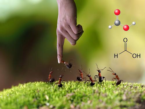 O ácido fórmico ou ácido metanoico é o ácido carboxílico de cadeia mais simples e está presente no veneno da picada da formiga