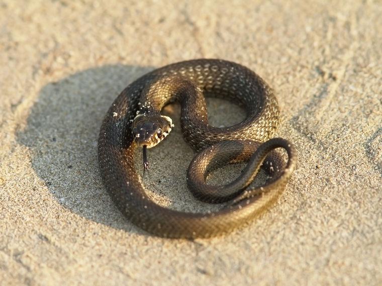 O experimento simula uma serpente saindo da areia